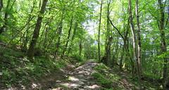 IMG_0058x (gzammarchi) Tags: strada italia natura pietra montagna paesaggio monti bosco mulattiera firenzuolafi
