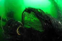 Plymouth-201605-JamesEaganLayne1-7-DangerousNetting (Tony J Gilbert) Tags: macro marine underwater plymouth diving scylla jameseaganlayne nikond300 handdeeps wwwdivingplymouthcom ceeking hilseapointrocks