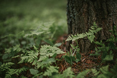 (DrowsyPotato) Tags: life wood plants tree green nature leaves forest canon 50mm leaf flora mood sweden mark sony ii trunk usm tones iv ef f12l a7r 12 metabones