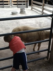 "Paul Pets a Sheep at the Kansas City Zoo • <a style=""font-size:0.8em;"" href=""http://www.flickr.com/photos/109120354@N07/27243940904/"" target=""_blank"">View on Flickr</a>"