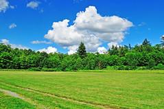 Aldergrove Regional Park 16-0610-0416 (digitalmarbles) Tags: landscape scenic serene tranquil blue sky clouds green grass field trees grassland nature abbotsford lowermainland bc britishcolumbia canada nikond300 nikon