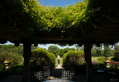 (Mr. Tailwagger) Tags: leica m240 tailwagger collings foundation superelmarm 21mm garden pergola