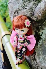 IMG_1537 (swanze2019) Tags: japan kyoto kinkakuji goldentemple