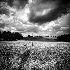 Brooding Barley (Flamenco Sun) Tags: june summer clouds clods westsussex sussex barley moody brooding field stedham