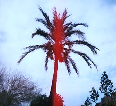 Red Palm (teaselbrush) Tags: shot film camera toy superheadz slim white angel widescreen wide angle glitch blur photography barcelona spain urban city sun beach seafront promenade sea ocean vignetting palm tree overexposed overexposure red light leak shadow silhouette