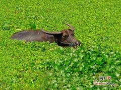 Water Buffalo - Along The Way-2.jpg