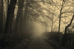 Misty Morning at Geddington Grange (Ninja Dog - 忍者犬) Tags: trees england nature landscape spring nikon scenery northamptonshire 2012 d80 geddington blinkagain bestofblinkwinners blinksuperstars