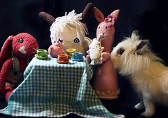 It's multicultural tea-time in Neve and Flat Neve's room in Occhieppo Superiore, Biella, North - Italy! (Flat Bonnie & Friends) Tags: rescue pet anime cute rabbit bunny bunnies art love dutch animal japan easter toy toys japanese stuffed mod hare doll soft hand flat graphic designer handmade crafts tail culture craft felt pop retro plush made plushies homemade cotton gift lucky harajuku kawaii indie plushie animation bonnie rabbits collectible etsy lover custom shelter fleece adopt bun lapin usagi adoption designers jpop lop crafted bunneh flatbonnie
