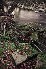 Moss near river (Alja Vidmar | ADesign Studio) Tags: 200r sherpa slovenia velbon d5000 filter longexposure moss nature ndfilter nd8x nikon polarized river tripod wood
