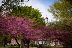U of I Quad (life is good (pete)) Tags: march spring quad universityofillinois uofi 24105mmf4 canon5dmkii
