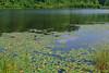 Big Hill Pond State Park (bhophotos) Tags: statepark travel trees usa lake nature landscape geotagged nikon tennessee swamp nikkor pocahontas midsouth westtennessee d80 2470mmf28g bighillpond bruceoakley travismcnattlake bighiilpondstatepark