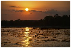 Daylight's Fading, Time To Fly Home (Lane Rushing) Tags: sunset heron grandmother bigmomma lakescape herowinner ultraherowinner storybookwinner