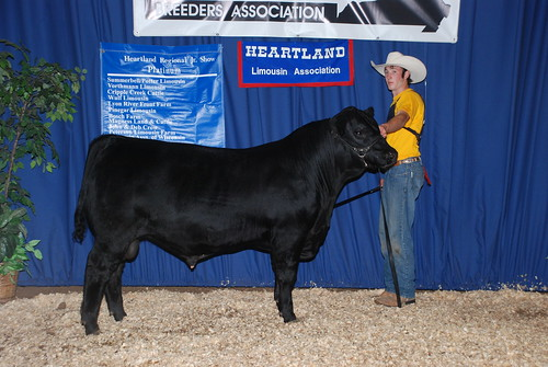 Res Champ Lim-Flex Bull