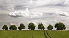 Field Trees 2 - Midsummer (L I C H T B I L D E R) Tags: trees summer field germany midsummer sommer feld bume dorp linde mettmann sommeranfang tiliaplatyphyllos fieldtrees sommerlinde