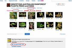 21,000 images 26th June 2012 - IDENTIFYING AUSTRALIAN RAINFOREST PLANTS, TREES and FUNGI Flickr Group (Black Diamond Images) Tags: rainforest rainforests 21000 australianplants rainforestflora rainforestplants rainforestplant australianrainforest arfp australianrainforests australianrainforestplants identifyingaustralianrainforestplants idrainforestgroupmilestones australianrainforestflora arfmilestone identifyingaustralianrainforestplantstreesandfungigroup 26thjune2012 21000images 21000imagesidrainforestgroup2662012 21000thimage rainforestidentification