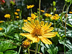 Light & Soul (~Amygdala~) Tags: ocean light sea flower flood soul thee verses tarakdhurjati