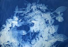 photogram (Bijou Lou) Tags: light metal garland blueprint habitat photogram cyanotype lightshade altprocess