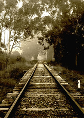 Tracks (MDH Images.) Tags: fog earlymorning healesville railwaytracks