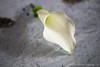 P1010221 (Garden Party Flowers) Tags: flowers white vancouver florist callalily boutonniere