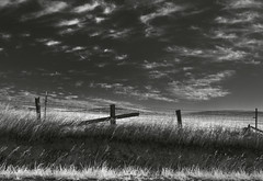 solano morning (Robert Couse-Baker) Tags: love grass clouds fence o2 farmland h2o rye pasture barbed nitrogen n2 hff