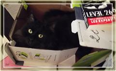 Poney Express Ike - Postal Ile (Zinaida Beaumont (in Budapest)) Tags: paris france cat chat mail roman box carton novel ike gatto katz rl reallife bote thriller ribbet paquet level26 friendsofzeusphoebe