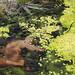 Muschio e licheni nelle Terme di San Juan (2)