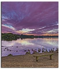 The Flash Swans (Muzammil (Moz)) Tags: sunrise lancashire swans leigh penningtonflash moz canon7d muzammilhussain penningtonflashcountrypark