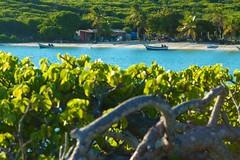 Al ladito vive gente (el pequeo ojo) Tags: ocean travel sea naturaleza nature mar venezuela viajes turtles arianna viajar tortugas caribe paria quintero arteaga lostestigos rocaribe lapequeacomeflor