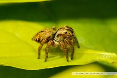 20121104-047 (ajakblackgoat) Tags: macro insect nikonmicro105mmf28 nikond700