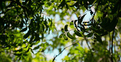 Random!! (HareshKannan) Tags: tree green leaves leaf nikon alone dof random go pleasant 55200mm d3100