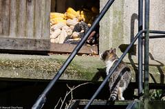 Comida! ([Kralik]) Tags: nikon gatos animales d7000