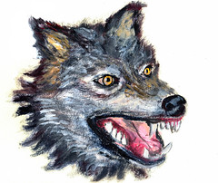 oil painting wolf head (dansemuou) Tags: wild dog black art nature face animal tattoo illustration painting fur grey design sketch scary eyes husky wolf paint hand power head drawing wildlife gray oil beast draw lupus isolated