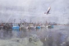 Docked in the past (Sunset Sailor) Tags: ocean sea bird dock marine seagull gull newengland maritime wharf nautical