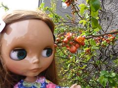 Quince Flowers (Bebopgirl1969) Tags: flower blythe quince manuhealiiparadisegirl