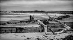 Alnmouth . (wayman2011) Tags: uk people beach mono coast seaside seascapes northumberland alnmouth canon5d lightroom bwlandscapes wayman2011