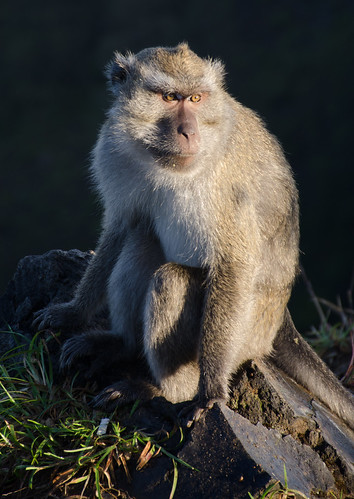 Monkey on Kelimutu