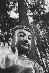 Buddha statue in redwood forest (jaksonroutledge) Tags: california blackandwhite bw film analog 35mm travels fineart religion documentary ishootfilm 35mmfilm bayarea editorial siliconvalley buddah westcoast find filmphotography filmphoto filmisnotdead analogfilm filmcommunity buyfilmnotmegapixels analogvibe