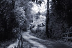 A country road Check This Out Taking Photos Diminishing Perspective Tree Road Nature Outdoors Landscape Beauty In Nature Non Urban Scene Vanishing Point (Jose Pires) Tags: road tree nature landscape outdoors vanishingpoint takingphotos diminishingperspective checkthisout beautyinnature nonurbanscene