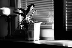 Morgonljus / morning light (camillagarin) Tags: ljus fotosondag fs160522