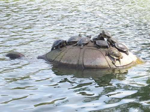 Turtles at Spreckels Lake