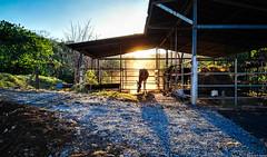 Corral (JoanZoniga) Tags: atenas costarica jczuniga p8 sunset atardecer sunsetlight puravida atenascostarica barriojesus