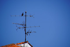 Guter Empfang! (ingrid eulenfan) Tags: sky himmel dach antenne vogel rabe dachantenne guterempfang