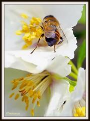 _JVA6723 (mrjean.eu) Tags: park pink flowers blue roses white france flower colour macro nature fleur rose yellow fleurs nikon jardin botanic lorraine botanique parc couleur metz gardin communal 105mmf28