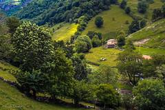 _DSC4090 (allabar8769) Tags: rboles paisaje montaa cantabria cabaa vegetacin