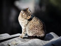 Street cat 149 (Yalitas) Tags: pet cats cat canon kat feline chat kitty gato felino katze katzen kot kedi kass gatta streetcat kotka  kocka  katte  katzchen kottur