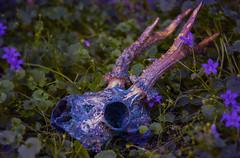[The Roe] (Koala Krash) Tags: cute eye stars skull decay galaxy morbid bone cosmic roe thirdeye