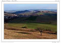 Paysage d'Auvergne (BerColly) Tags: winter france tree landscape google flickr hiver paysage arbre auvergne puydedome vertaizon bercolly