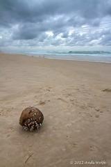 Coconut on the beach (andiwolfe) Tags: ocean seascape coast morninglight coconut australia