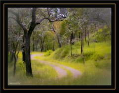 Linville forest fantasy. (agphoto100) Tags: road trees tree green grass forest photoshop lumix bush track path gums linville qld hdr lightroom presets fz7 lumixdmcfz7