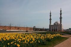 Spring in Rotterdam (arjaano) Tags: spring rotterdam lente daffodils ws narcissen essalammoskee